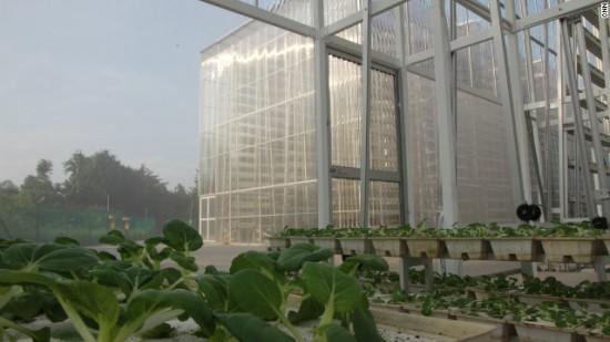 121205042557-singapore-vertical-farm-6-horizontal-gallery